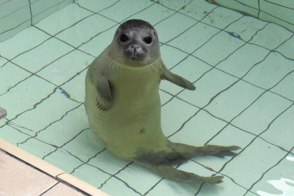 Foto van PIP de zeehond